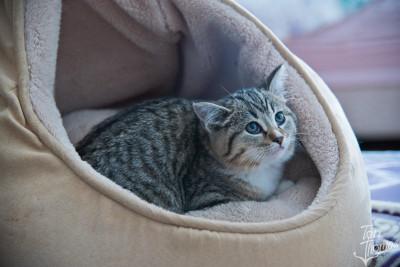 Mitzu the Cat