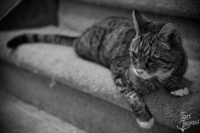 Tigger the Cat